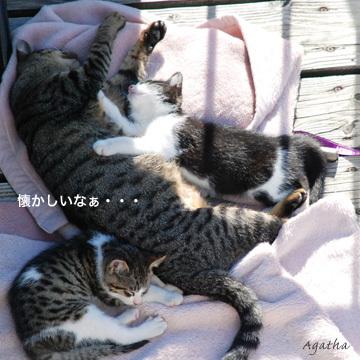子猫、発見
